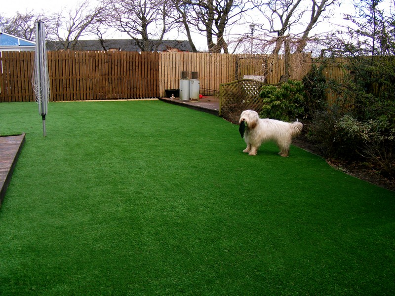 WHY ARTIFICIAL GRASS IS PERFECT FOR PETS